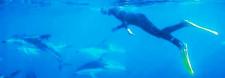 Dolphin Encounter, New Zealand