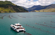 Greenshell Mussel Cruise, New Zealand