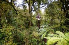 Canopy Tours, Rotorua
