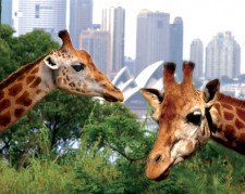 Australia, New South Wales, Sydney, Half Day Tours