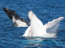 Whale Watch, Sydney, Australia