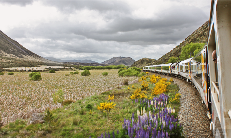 KiwiRail Scenic in the Spring