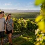 Waiheke Island Wineries